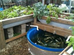 feed the world - aquaponics